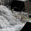写真: 飛沫氷