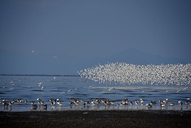 水鳥の楽園3