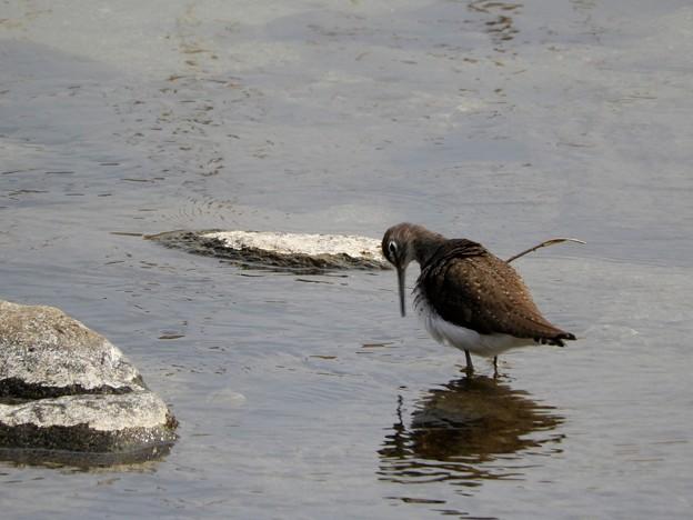 水辺の野鳥1