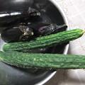 写真: 採れたキュウリ、茄子