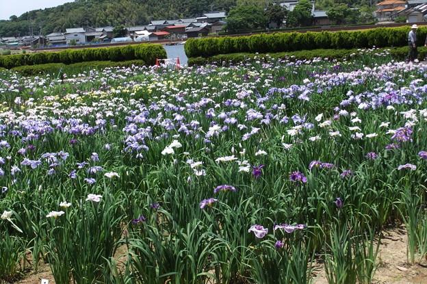 北潟湖畔公園 5