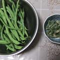 インゲン豆とインゲン豆の胡麻和え
