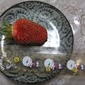 家庭菜園の苺は直径 5センチ