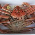 タグ付きの茹でた熱々の越前蟹