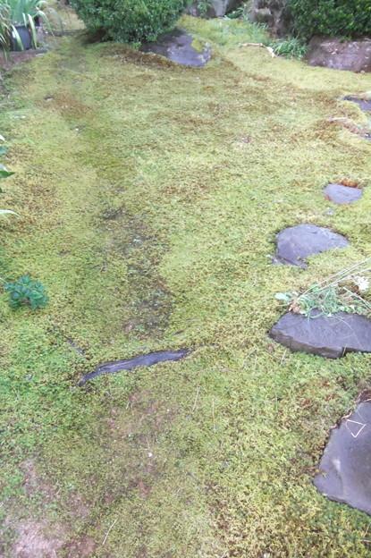 庭の水撒き