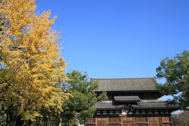 IMG_4537東寺(教王護国寺)・銀杏と金堂(国宝)