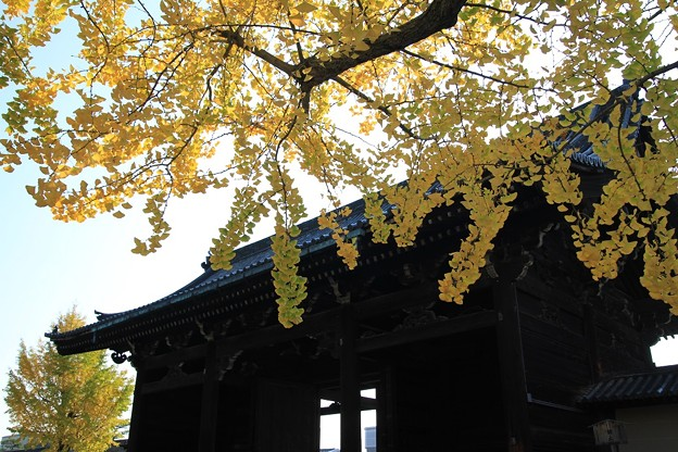 IMG_4545東寺(教王護国寺)・銀杏と南大門(重要文化財)