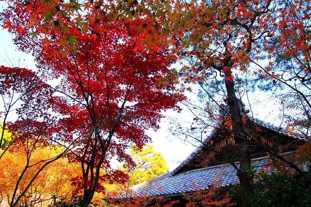 IMG_4687大徳寺・高桐院・紅葉と本堂(客殿)