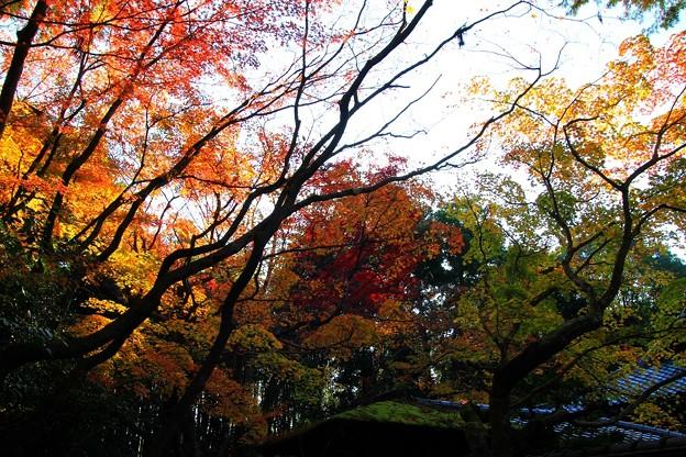 IMG_4705大徳寺・高桐院・紅葉