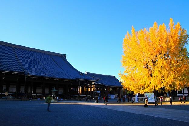 IMG_4835銀杏と阿弥陀堂(本堂)(国宝)