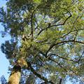 IMG_6109招霊の木