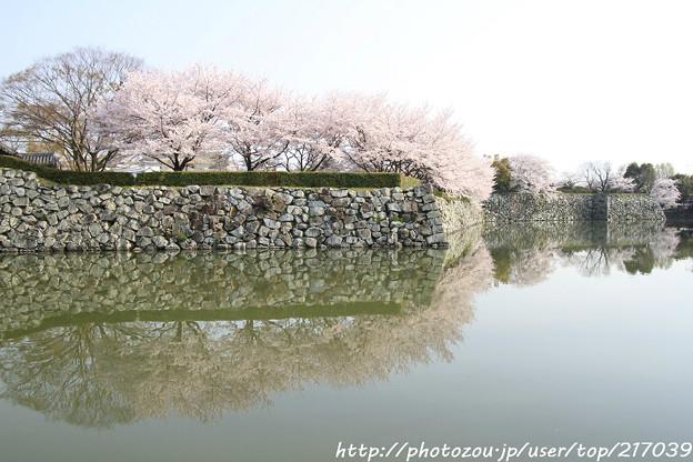 IMG_8086姫路城