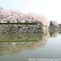 写真: IMG_8086姫路城