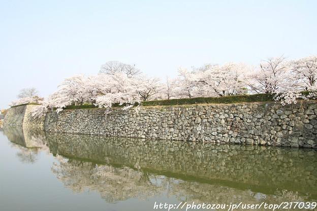 写真: IMG_8088姫路城