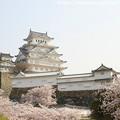 Photos: IMG_8116姫路城(国宝)と染井吉野