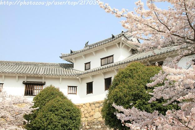 IMG_8140姫路城・百間廊下と染井吉野