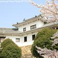 Photos: IMG_8140姫路城・百間廊下と染井吉野