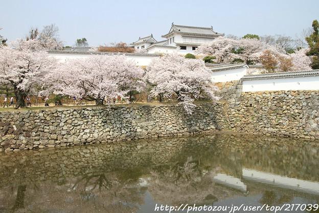 写真: IMG_8170三国堀