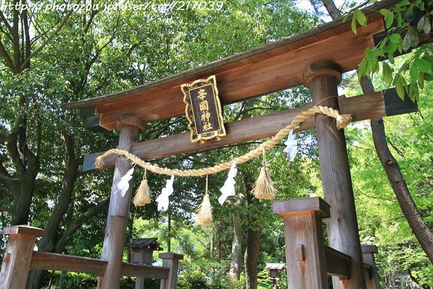 IMG_8236辛國神社・鳥居