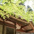 写真: IMG_8339室生寺・いろは紅葉と金堂(国宝)