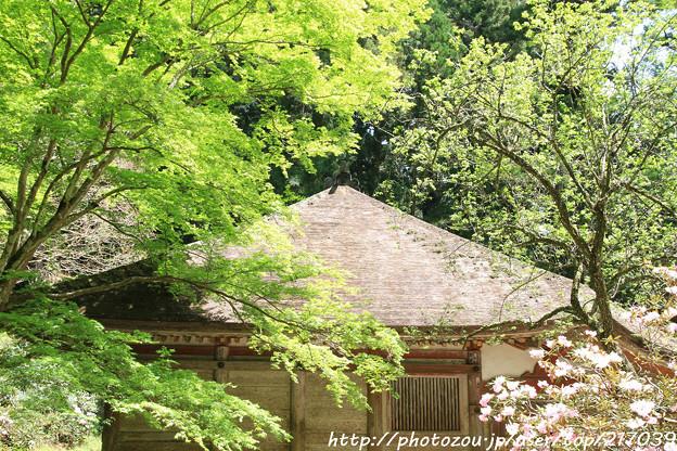 IMG_8344室生寺・いろは紅葉と金堂(国宝)