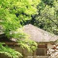 写真: IMG_8344室生寺・いろは紅葉と金堂(国宝)