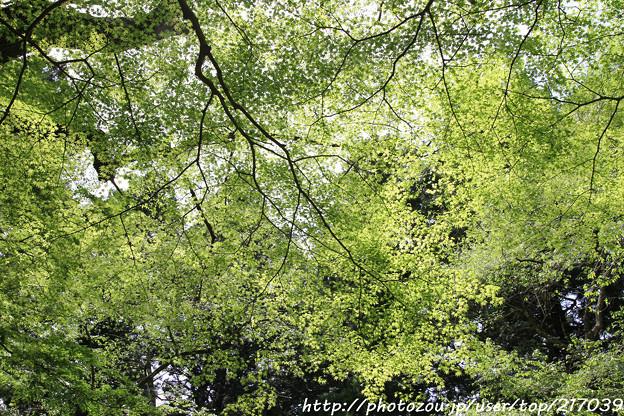 写真: IMG_8371室生寺・いろは紅葉
