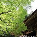 写真: IMG_8372室生寺・いろは紅葉と本堂(潅頂堂)(国宝)