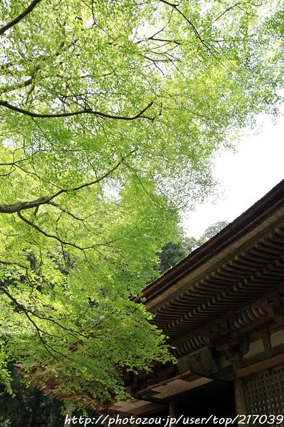 IMG_8373室生寺・いろは紅葉と本堂(潅頂堂)(国宝)