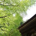 Photos: IMG_8373室生寺・いろは紅葉と本堂(潅頂堂)(国宝)