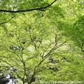 写真: IMG_8378室生寺・いろは紅葉