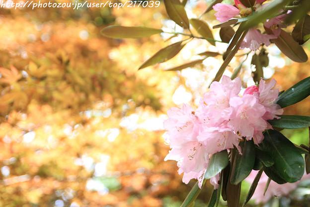 IMG_8391室生寺・石楠花といろは紅葉