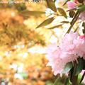 写真: IMG_8391室生寺・石楠花といろは紅葉