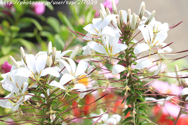 IMG_8479お花