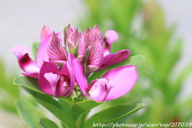 IMG_8487お花