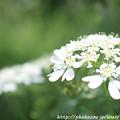 Photos: IMG_8543オルレア