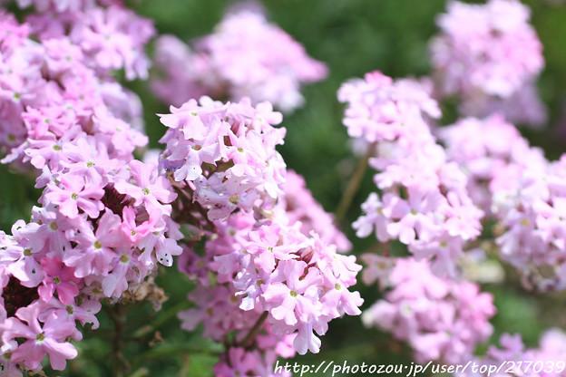 IMG_8546お花