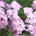 Photos: IMG_8546お花