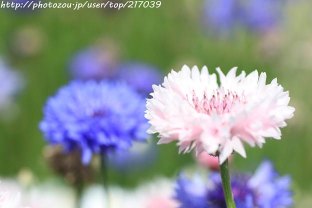 IMG_8559お花