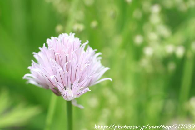 IMG_8562お花