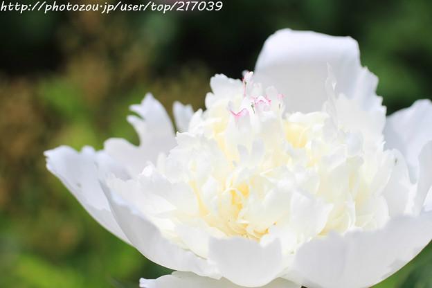 IMG_8603石楠花