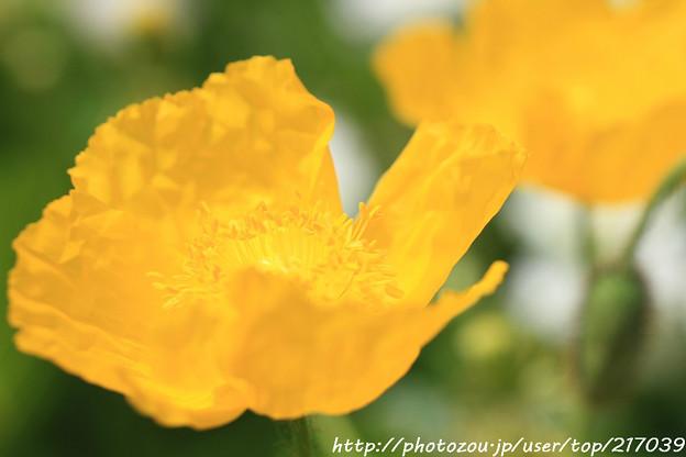 IMG_8657お花