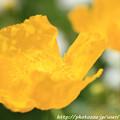 Photos: IMG_8657お花