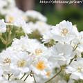 写真: IMG_8664お花