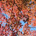Photos: IMG_8723興志漏神社・いろは紅葉