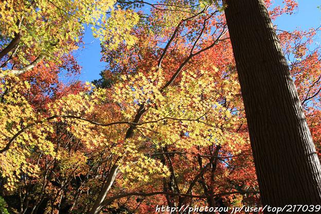 Photos: IMG_8725鶏足寺(旧飯福寺)・いろは紅葉