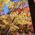 写真: IMG_8725鶏足寺(旧飯福寺)・いろは紅葉