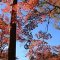 IMG_8726鶏足寺(旧飯福寺)・いろは紅葉