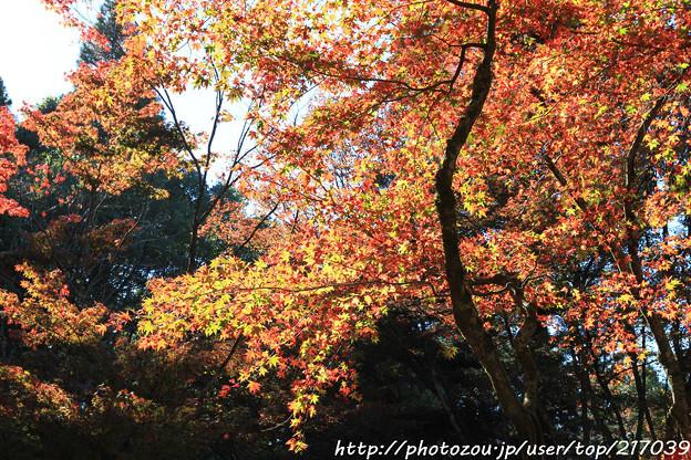 IMG_8728鶏足寺(旧飯福寺)・いろは紅葉