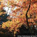 Photos: IMG_8728鶏足寺(旧飯福寺)・いろは紅葉